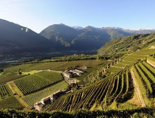 La Via dei Terrazzamenti: in Valtellina pedalando tra i vigneti e visite in cantina