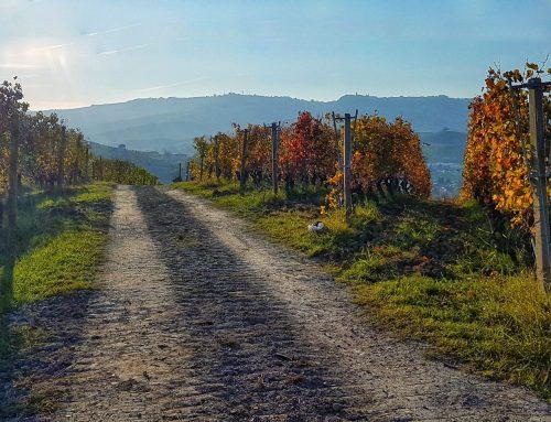 Nelle Langhe in mountain bike: due giorni tra vigneti e borghi antichi