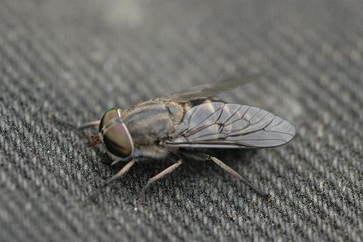 insetti e parassiti