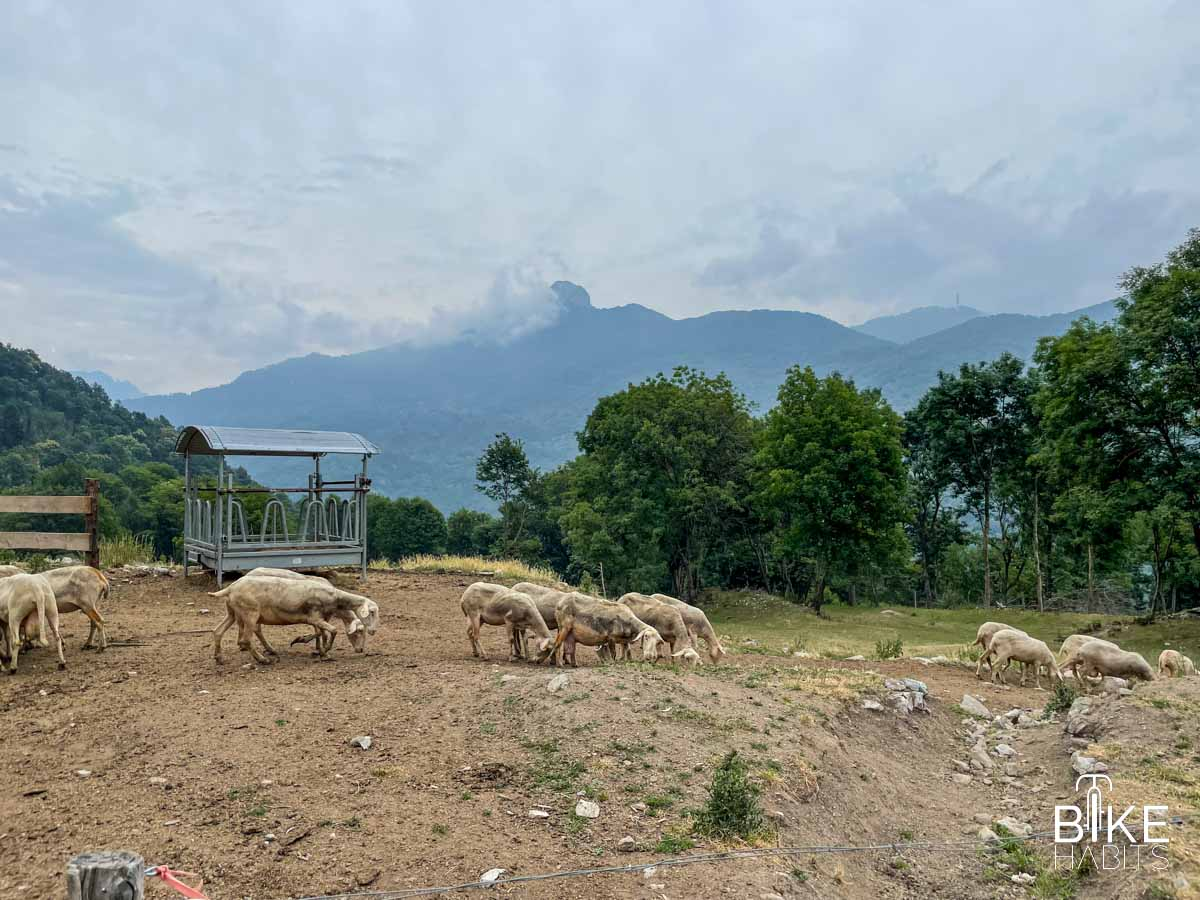 vista sui Corni dall'Azienda Agricola Alpe di Megna